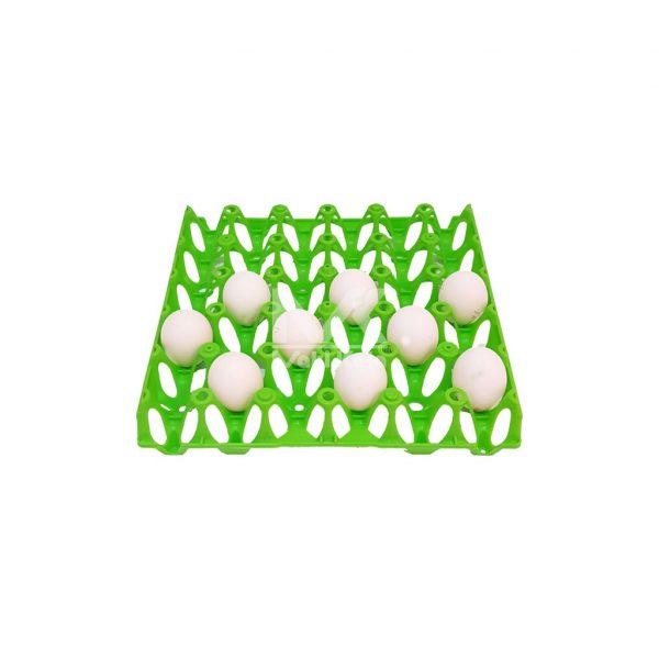 شانه حمل تخم مرغ سبز نما بالا